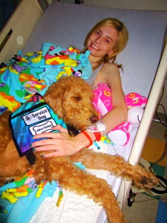 Alice Eloise Double Doodle service dog at hospital