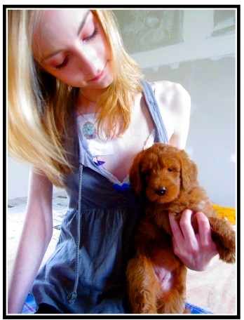 Sarah Kate and Alice Eloise Double Doodle Puppy